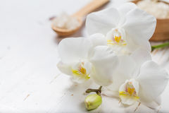 SPA concept with towel and orchid Royalty Free Stock Photos