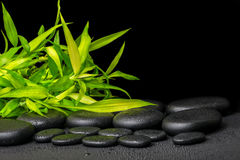 Spa concept of twigs bamboo with dew on zen basalt stones, close Royalty Free Stock Photos