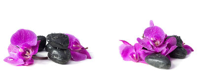 Spa concept of violet orchid on stones Stock Image
