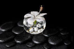 Spa concept of white hibiscus flower in round vase with pearl be Royalty Free Stock Photography