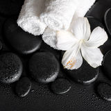 Spa concept of white hibiscus flower and towels on zen basalt st Stock Images