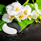 Spa concept of white orchid flower, phalaenopsis, green leaf wit Stock Photography