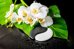 Spa concept of white orchid flower, phalaenopsis, green leaf wit Stock Image
