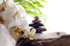 Spa concept white orchid on stones Stock Images