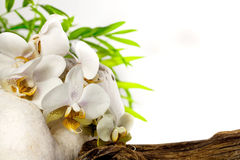 Spa concept white orchid on stones Stock Image