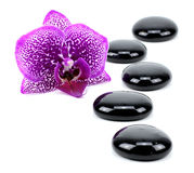 Spa concept zen basalt stones!!! Stock Photography