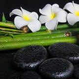 Spa concept of zen basalt stones,  white flower frangipani Royalty Free Stock Photography
