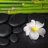 Spa concept of zen basalt stones, white flower plumeria and natural bamboo with dew, closeup royalty free stock images