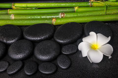 Spa concept of zen basalt stones, white flower plumeria Stock Photo