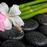 Spa concept of zen basalt stones, white and pink hibiscus flower Stock Photo