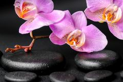 Spa concept of zen massaging stones, lilac orchid Stock Photography