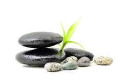 Spa concept zen. Zen stone with bamboo leaf on white background. Spa concept Stock Photo