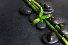 Spa-concept with zen stones and bamboo. Spa concept with black basalt massage stones and green bamboo shoots covered with water drops on a black background stock image