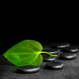 Spa concept of zen stones and green leaf on black background Royalty Free Stock Images