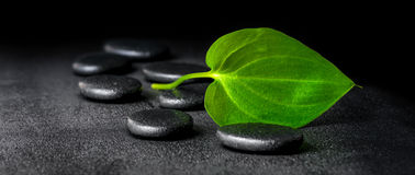Spa concept of zen stones and green leaf on black background wit. H dew, panorama royalty free stock images