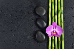 Spa concept with zen stones, orchid flower and bamboo. Spa concept with black basalt massage stones, pink orchid flower and a few stems of Lucky bamboo covered stock photography