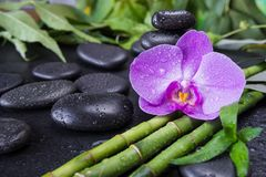 Spa concept with zen stones, orchid flower and bamboo royalty free stock images