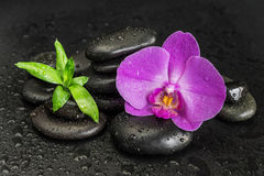 Spa concept with zen stones, orchid flower and bamboo stock images