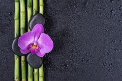 Spa concept with zen stones, orchid flower and bamboo. Spa concept with black basalt massage stones, pink orchid flower and a few stems of Lucky bamboo covered stock images