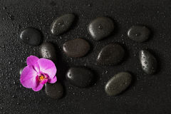 Spa-concept with zen stones and orchid flower stock image
