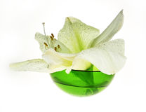 Spa decoration - amaryllis in glass green bowl Stock Photography
