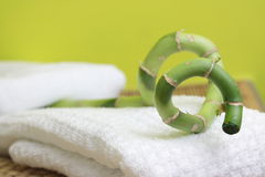 Spa design with bamboo. Spa design with lucky bamboo on towel Stock Photography