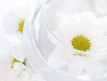 Spa details. Spa and wellness details, flowers in water Royalty Free Stock Photo