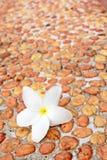 Spa flower Stock Photos