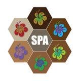 Spa Flower stock photo