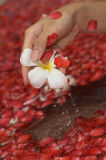 Spa flower bath. Hand with petals Royalty Free Stock Image