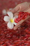 Spa flower bath. Hand with petals Royalty Free Stock Photography