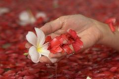Spa flower bath. Hand with petals Royalty Free Stock Photos