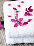 Spa FLower Closeup Royalty Free Stock Images