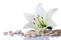 Spa Flower Towel Sea Shell Stock Photos