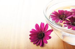 Spa flowers Stock Image