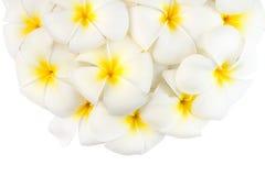 Spa Flowers Royalty Free Stock Photos