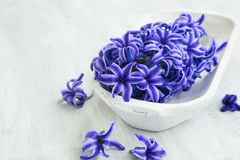 Spa flowers setting with hyacinth Royalty Free Stock Photo
