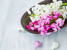 Spa flowers setting with hyacinth Royalty Free Stock Images