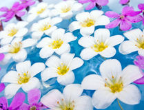 Spa Flowers on the Water. Delicate pink and white flowers floating on water Royalty Free Stock Photo