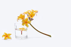 Spa with frangipani flowers and tumbler. Royalty Free Stock Photography