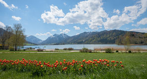 Spa gardens schliersee with tulip flowerbed Stock Images