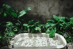 Spa garnering, naturliga organiska produkter p? en bathtube royaltyfri foto