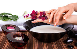 Spa for hands with orchids and bowl of milk Royalty Free Stock Photography
