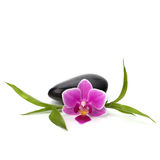 Spa and healthcare concept. Orchid and stones. Stock Photo