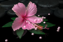 Spa healthcare of pink hibiscus flower on green leaf with drops Stock Photography