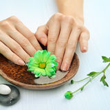 Spa for hends. Wooden bowl of water with flowers Royalty Free Stock Image