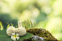 Spa herbal compressing ball , white frangipani flowers Plumeria spp , Apocynaceae flower, Pagoda tree flower, Temple tree flower Stock Image
