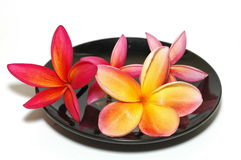 Spa Icon. Tropical plumeria on black saucer Stock Image