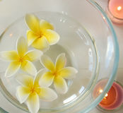 Spa image. Of frangipani flowers royalty free stock photography