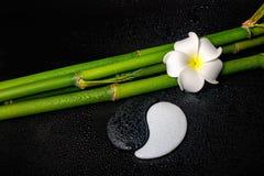 Spa inställning av den vita frangipaniblomman, symbol Yin Yang och nat Royaltyfri Fotografi